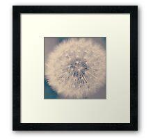 Dandelion - Art Print Framed Print