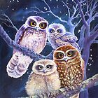 Boobook Owl Family by katemccredie