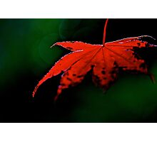 Fall Glow Photographic Print