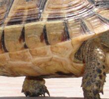 Marching Baby Tortoise  Sticker