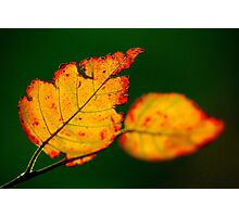 Shredded Leaf Photographic Print