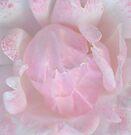 Rose Bud by pseth