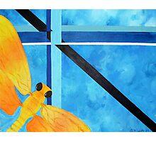 Firefly 1 Photographic Print
