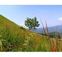Lonely tree on a mountain slope Photographic Print