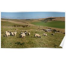 Sheep On The Landscape Poster