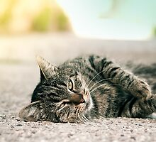 good morning kitty by Imre Krénn