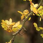 Branch by Jordan Moffat
