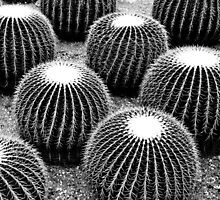 Cacti  by Ethna Gillespie