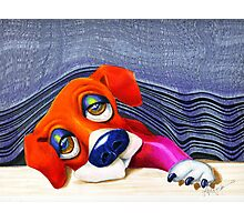 Puppy Blinds Spot Photographic Print