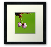 Love blooms with cherry blossoms Framed Print