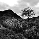 Arthur's Seat Tree by Jordan Moffat