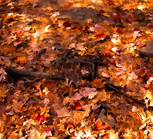 Tree Roots in a Carpet of Fall Leaves by Chantal PhotoPix