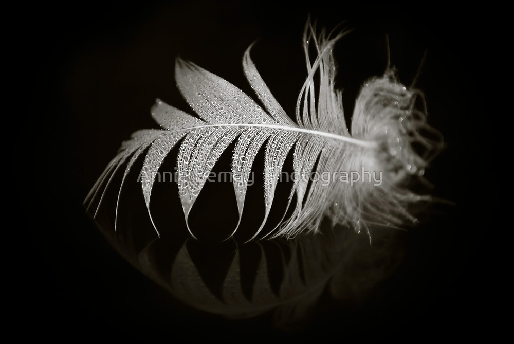 Fallen by Annie Lemay  Photography