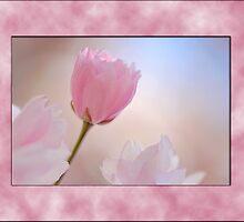 Cherry Blossom by pseth