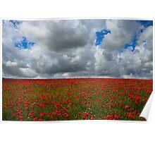 Poppy field - Eartham, West Sussex Poster