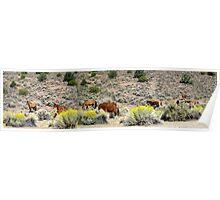 Mustang's Panorama Poster