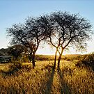 Golden Savanna by globeboater