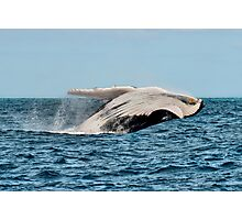 Hervey Bay Whale Watching Photographic Print