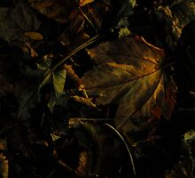 Autumn by Themis