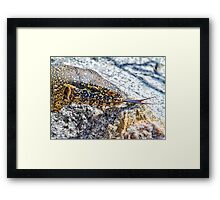 Flick Of The Tongue Framed Print