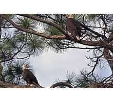 Mr & Mrs Eagle  Photographic Print