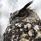 Twit? Who? - Owl by Daisy-May