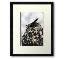Twit? Who? - Owl Framed Print