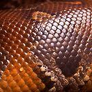 Snake Skin  by Daisy-May