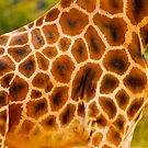 Patchwork Coat on a Giraffe by Daisy-May
