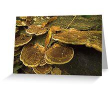Fungi Pancakes Greeting Card