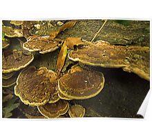 Fungi Pancakes Poster