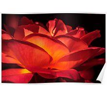 Red Rose Petals Poster