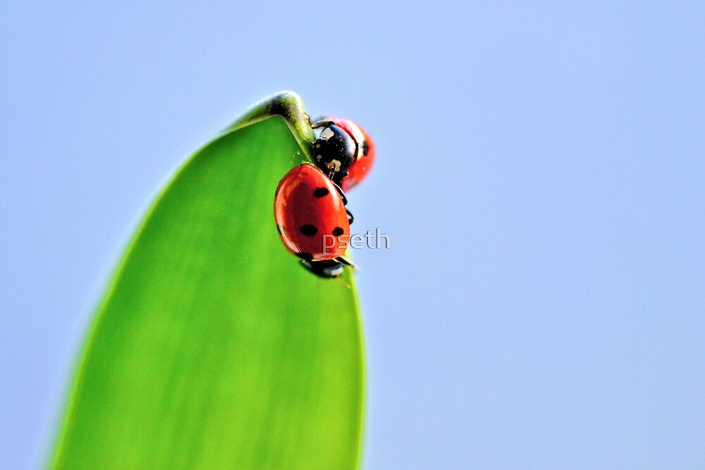 Ladybirds in a Spring Garden by pseth