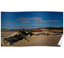 Celp on beach, East Coast Tasmania. Poster
