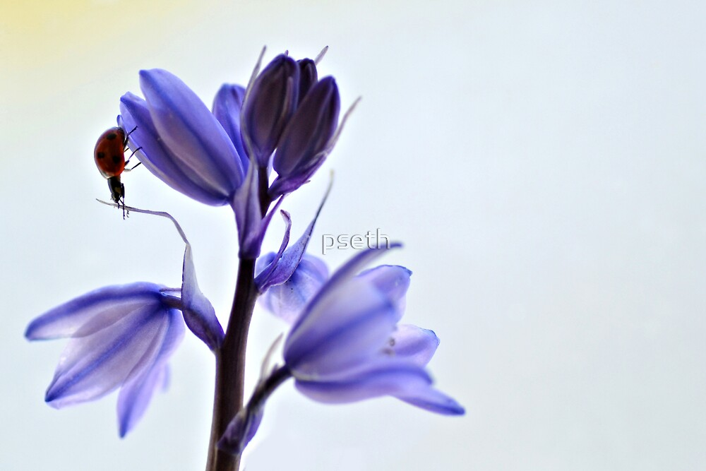Ladybird on Blue Bell by pseth
