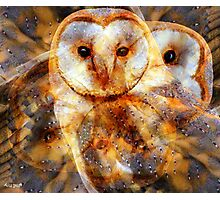 Designs Inspired By Nature: Barn Owl Photographic Print