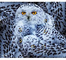 Designs Inspired By Nature: Snowy Owl Photographic Print