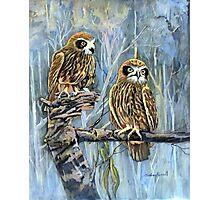 Southern boobook owls australia Photographic Print