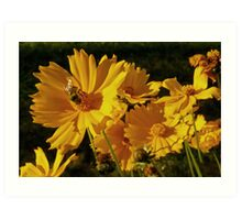 sunny bee and blossoms Art Print