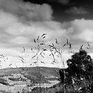 Cardrona Woods, Scottish Borders by Iain MacLean