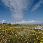 Spring is Beautiful by CollinScott