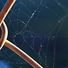 Webbed Fence by CollinScott