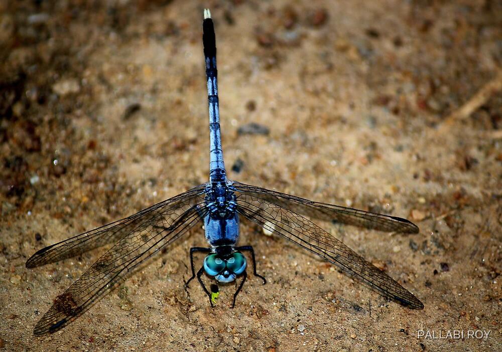 LOOK AT MY BEAUTIFUL BLUE EYES by PALLABI ROY