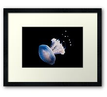 Spotted Jellyfish (phyllorhiza punctata) in an Aquarium  Framed Print