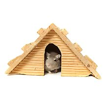 Successful mouse living in a wooden house Photographic Print