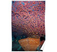 Overhanging sea fan Poster