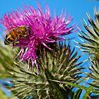 Bee Macro by SimplisticPhoto