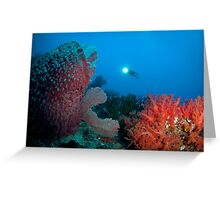 Diver surveying beautiful reef scene Greeting Card