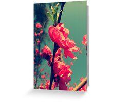 Lomo Blossoms  Greeting Card