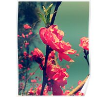 Lomo Blossoms  Poster